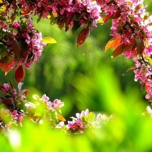 CLIMATE-FRIENDLY-GARDENING