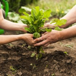 Organic Gardening tips for the whole year